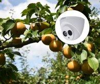 果林环境使用无线视频监控解决方案